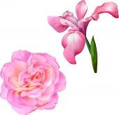Gyönyörű virágok szett