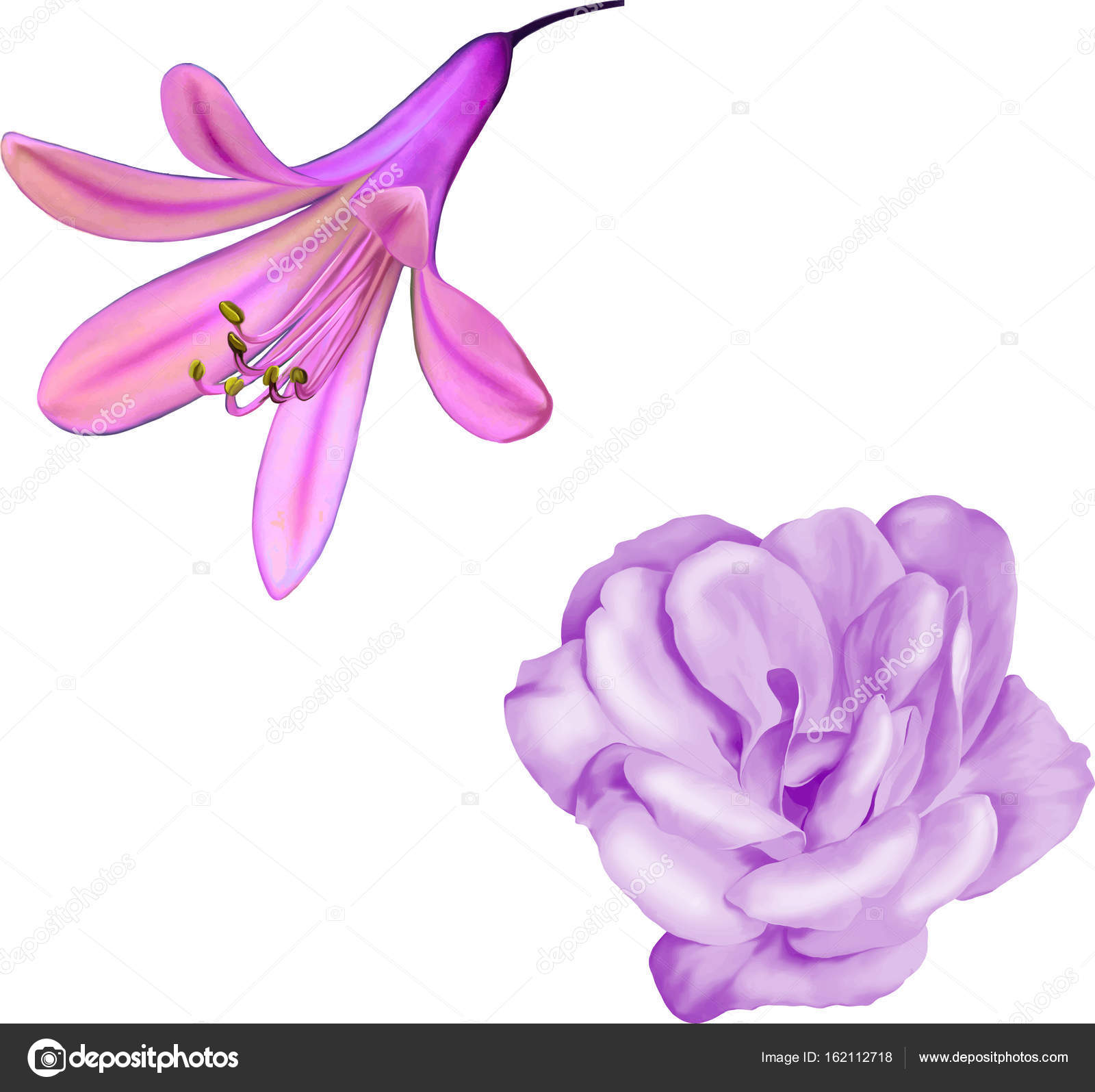 Pink camellia and purple lily flowers stock photo artnature pink camellia and purple lily flowers stock photo izmirmasajfo