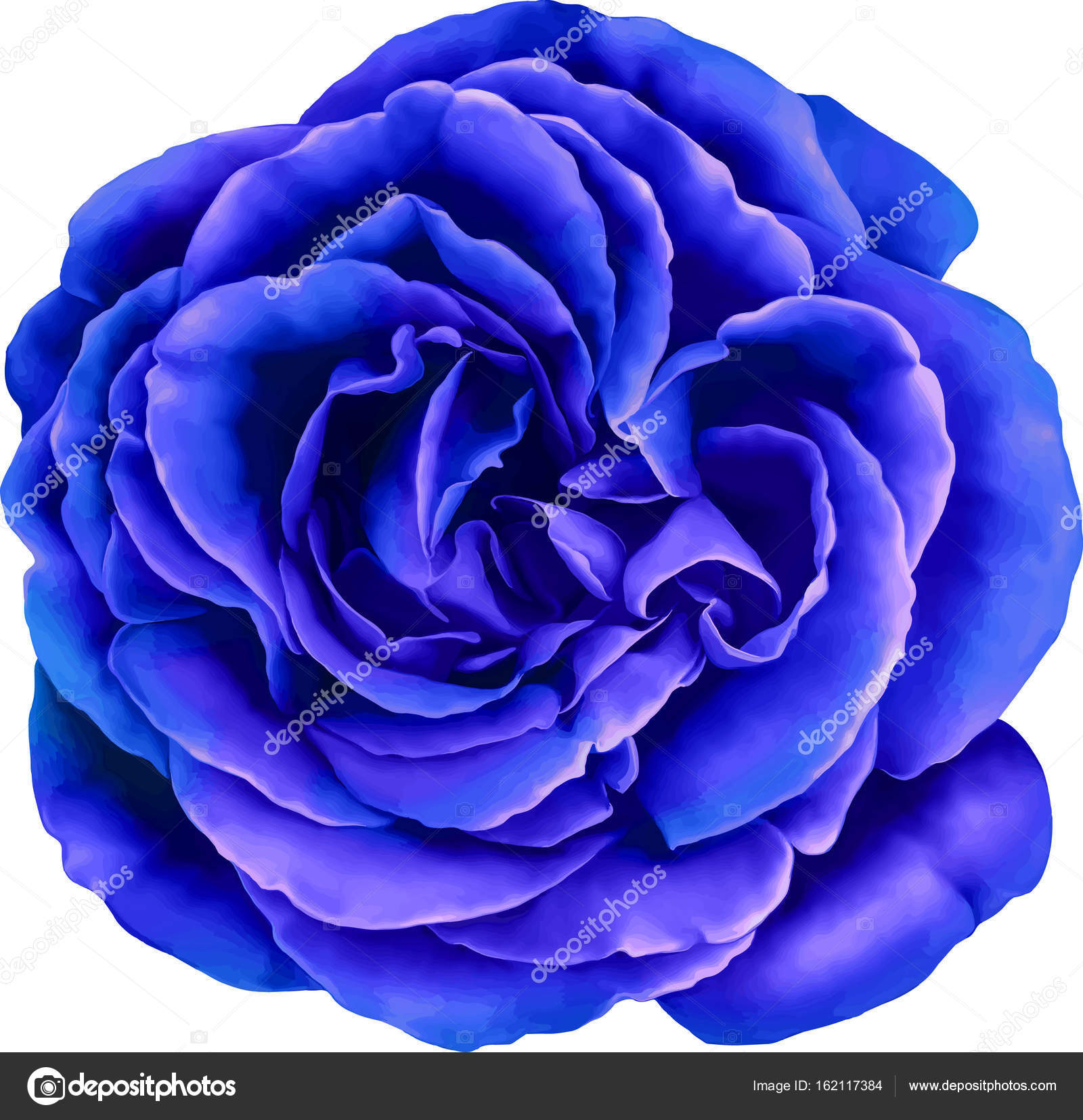 Beautiful Blue Rose Flower Stock Photo C Artnature 162117384