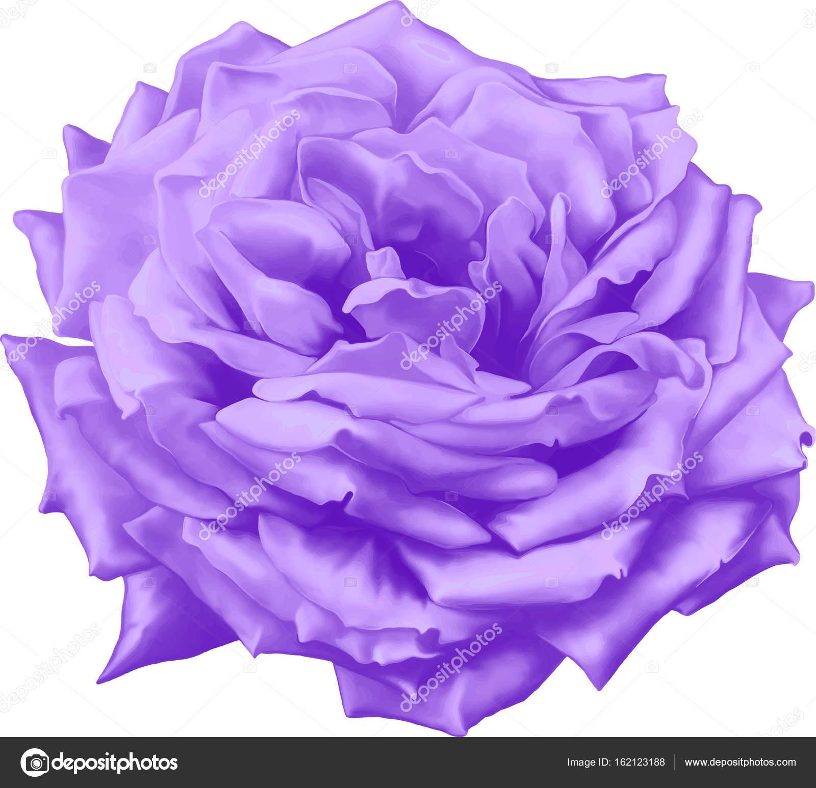 Beautiful Blue Rose Flower Stock Photo Artnature 162123188