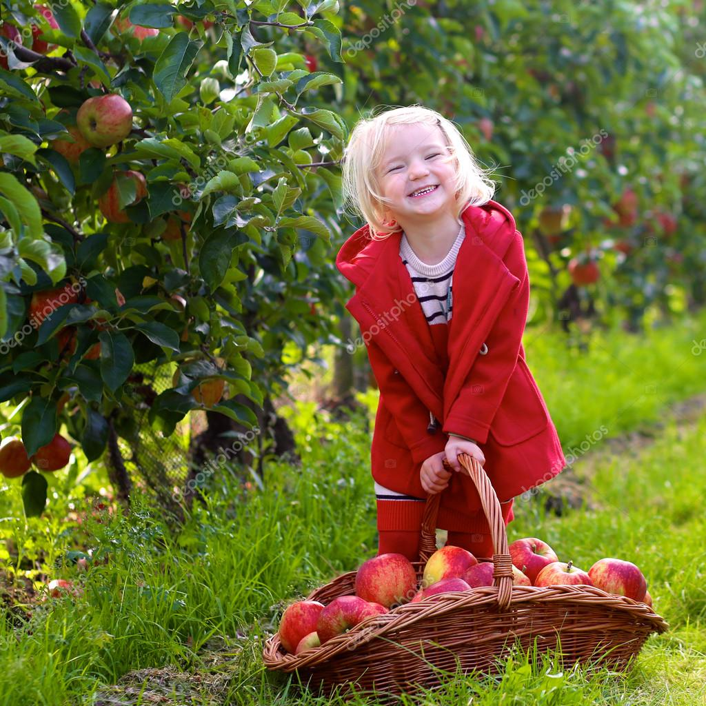 Toddler girl picking apples from the trees in the orchard