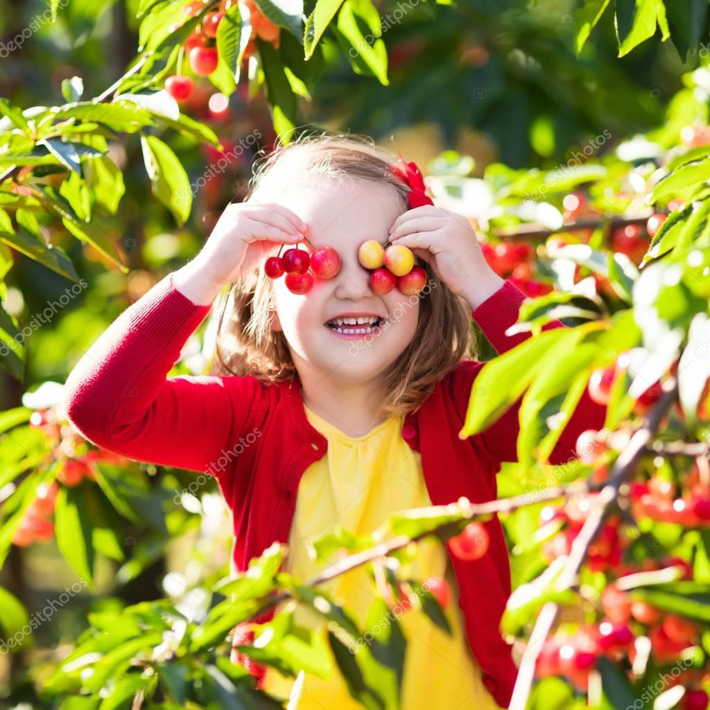 Little girl picking cherry in fruit garden