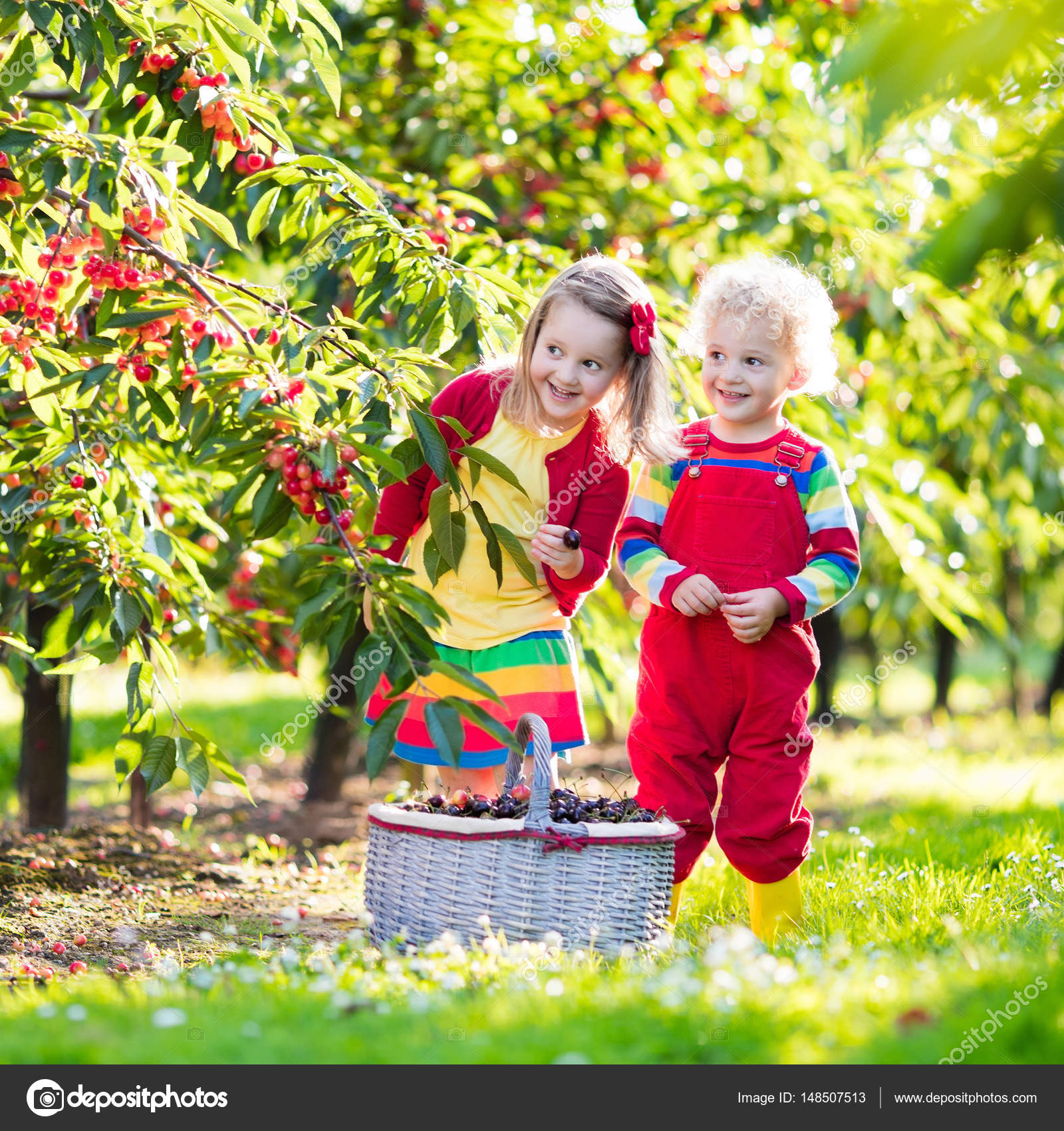 Kids picking cherry on a fruit farm garden — Stock Photo ... for Fruit Farm Photography  584dqh
