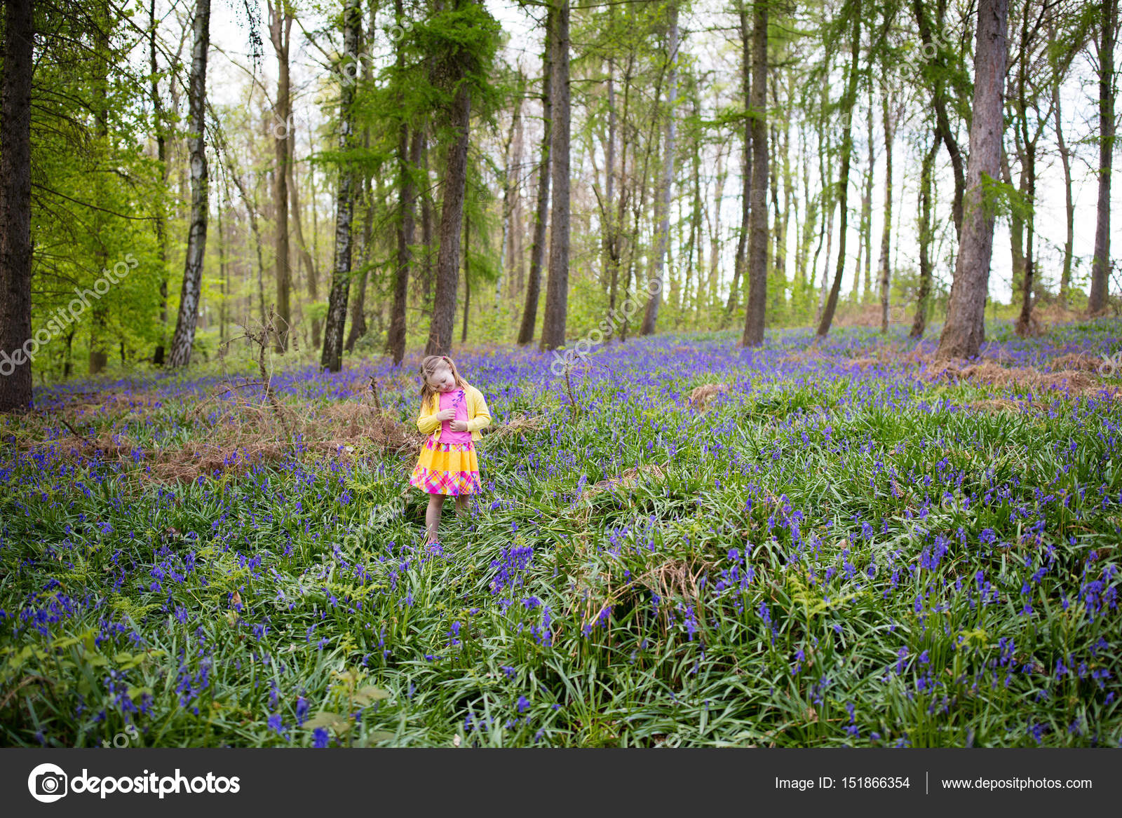 Child With Bluebell Flowers In Spring Forest Stock Photo