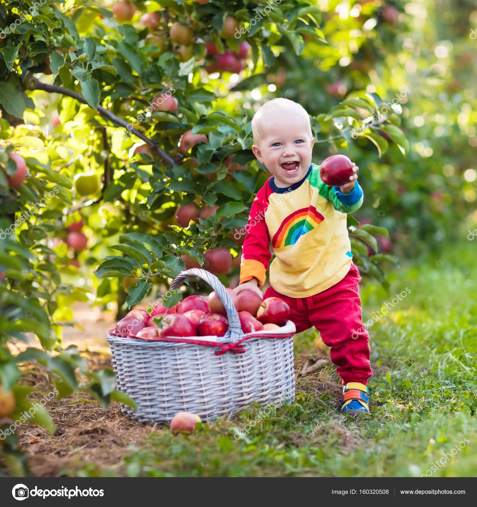 baby boy picking apples in fruit garden — stock photo © famveldman
