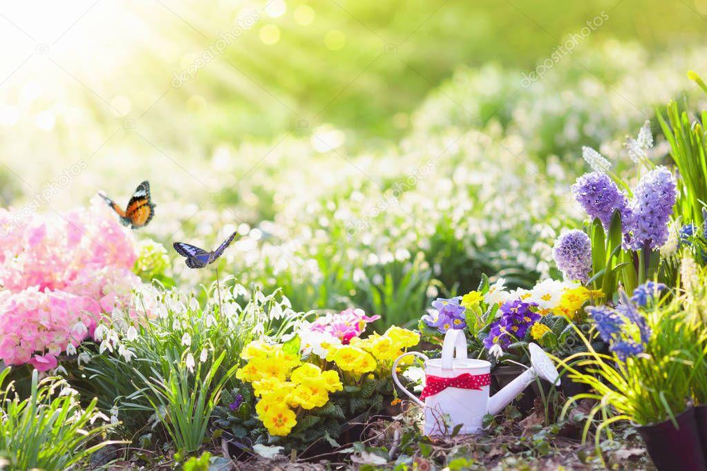 Spring garden with flowers. Gardening tools.