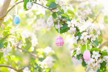 Easter eggs on blooming cherry tree.