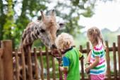 Fotografie Familie Fütterung Giraffen im Zoo. Kinder ernähren sich Giraffen in tropischen Safari Park während der Sommerferien in Singapur. Kinder beobachten Tiere. Kleine Mädchen und Jungen geben Obst, wildes Tier