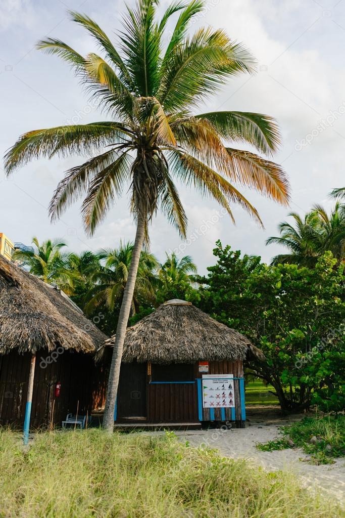 Häuschen am Strand, umgeben von Palmen und sand — Stockfoto ...