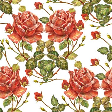 Red roses colored pencils. Bouquet flowers for decor your card.Floral seamless pattern.
