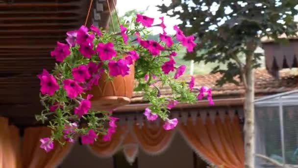 Beautiful flowers in hanging pot on the patio. Petunia