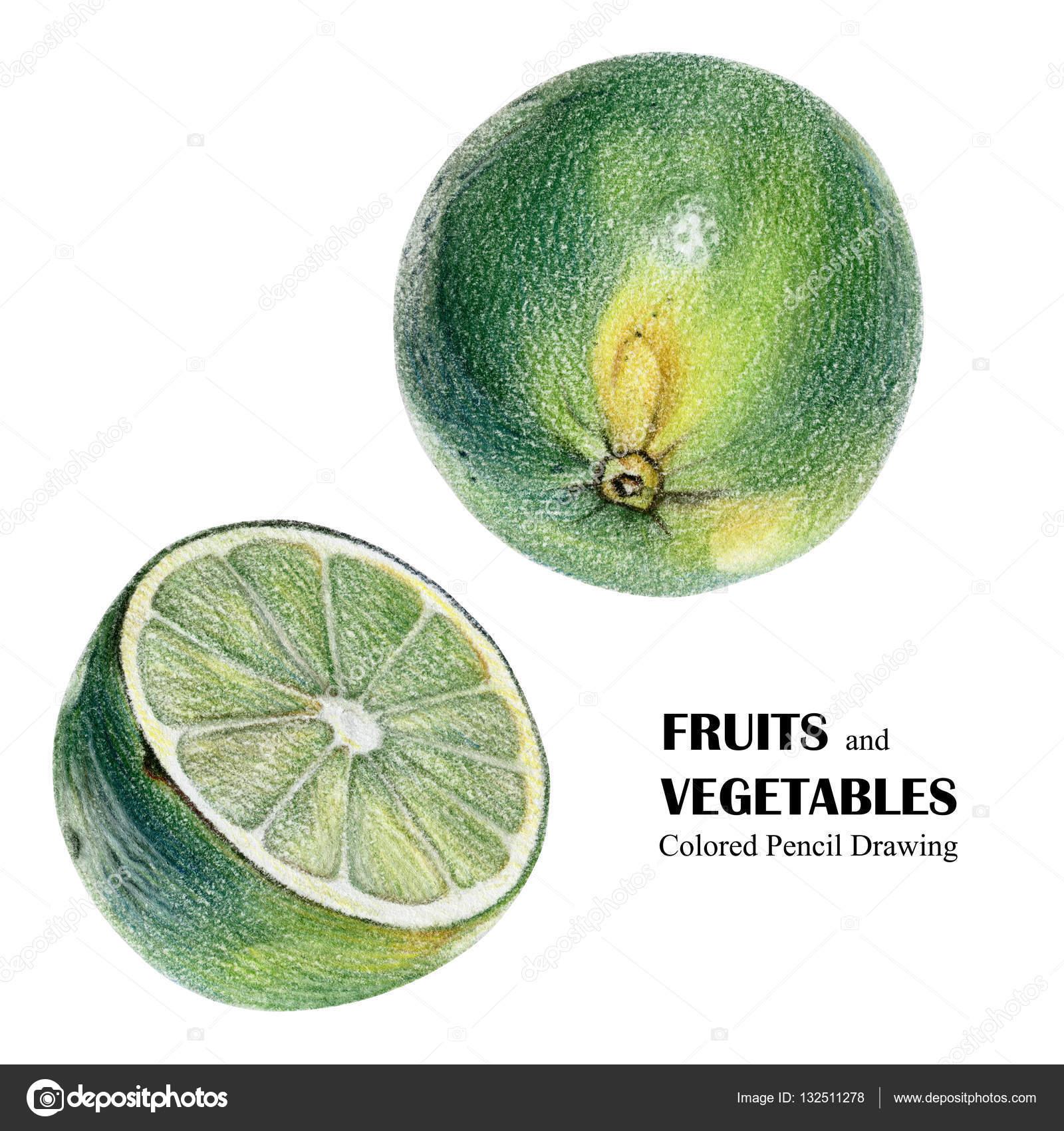Dibujos Frutas Color Verde Ilustracion Con Lima Verde Dibujado A