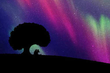 Vector illustration with silhouette of loving couple. Northern lights in starry sky clip art vector