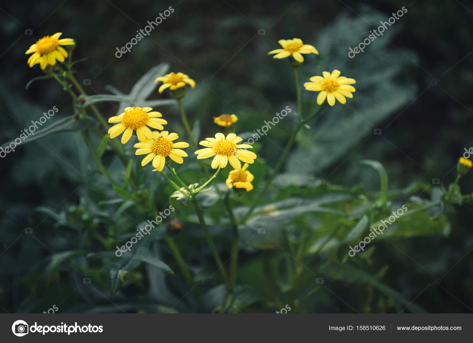 Fiori Gialli Yahoo.Small Yellow Wild Flowers Stock Photo C Mirekpesek Yahoo Com