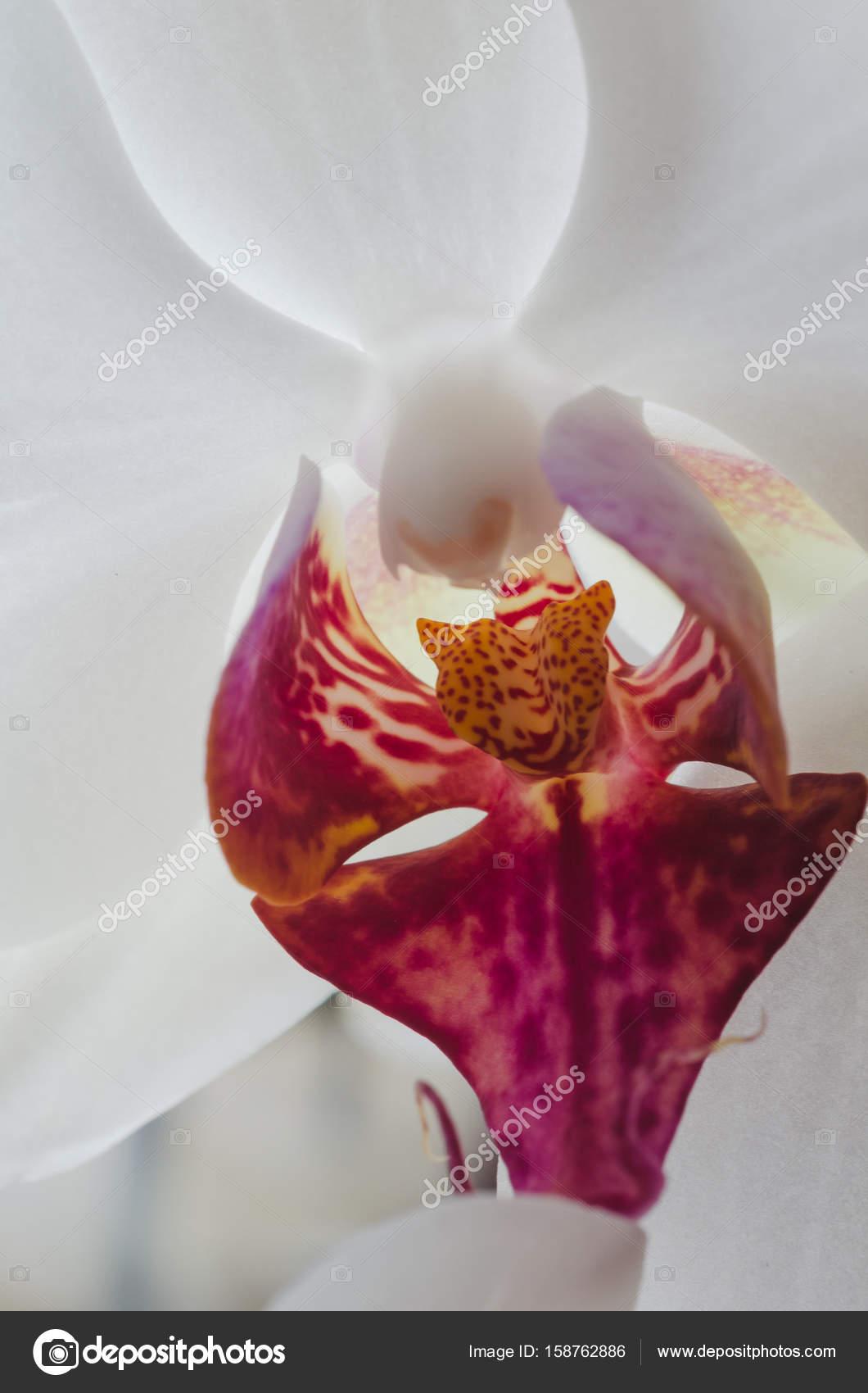 многолетние зимостойкие цветы фото и название
