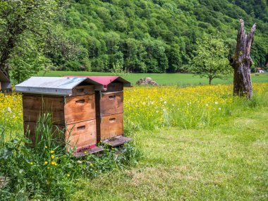 Beehive wooden house  background