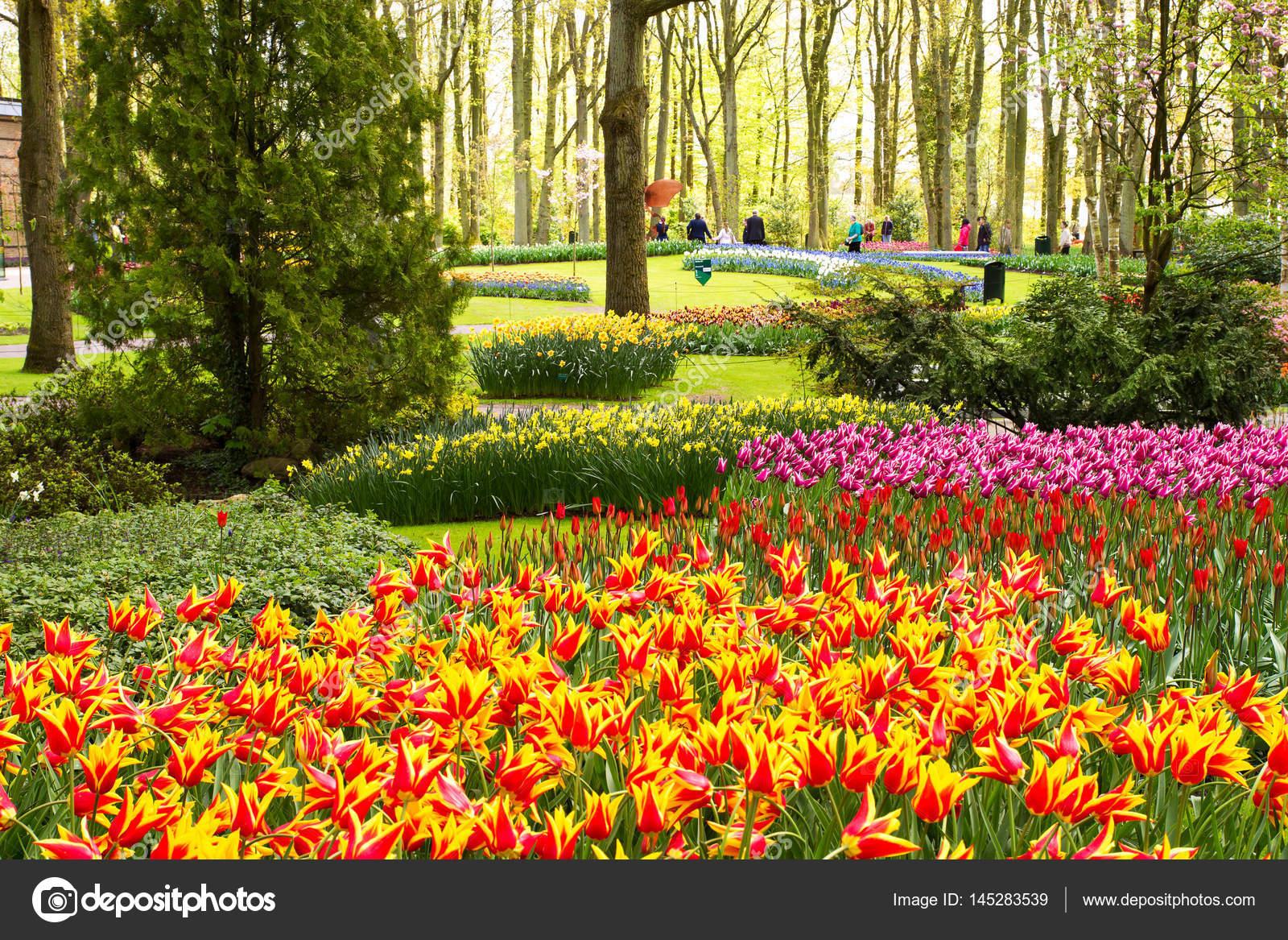 Fiori colorati nel parco di primavera paesaggio del fiore for Sfondi desktop gratis primavera