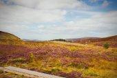 schöne malerische Berglandschaft. wicklow mountains nationalpark, county wicklow, irland