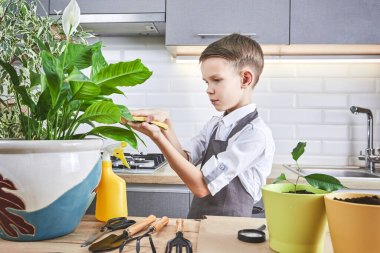 Cute little gardener with a plants indoors. The boy takes care of the plants at home.