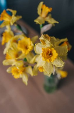 Beautiful yellow daffodils. Yellow narcissuses in a garden. Top view