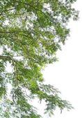 alberi della foresta. luce solare legno natura verde