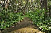 Zelené listy na chodníku v lese