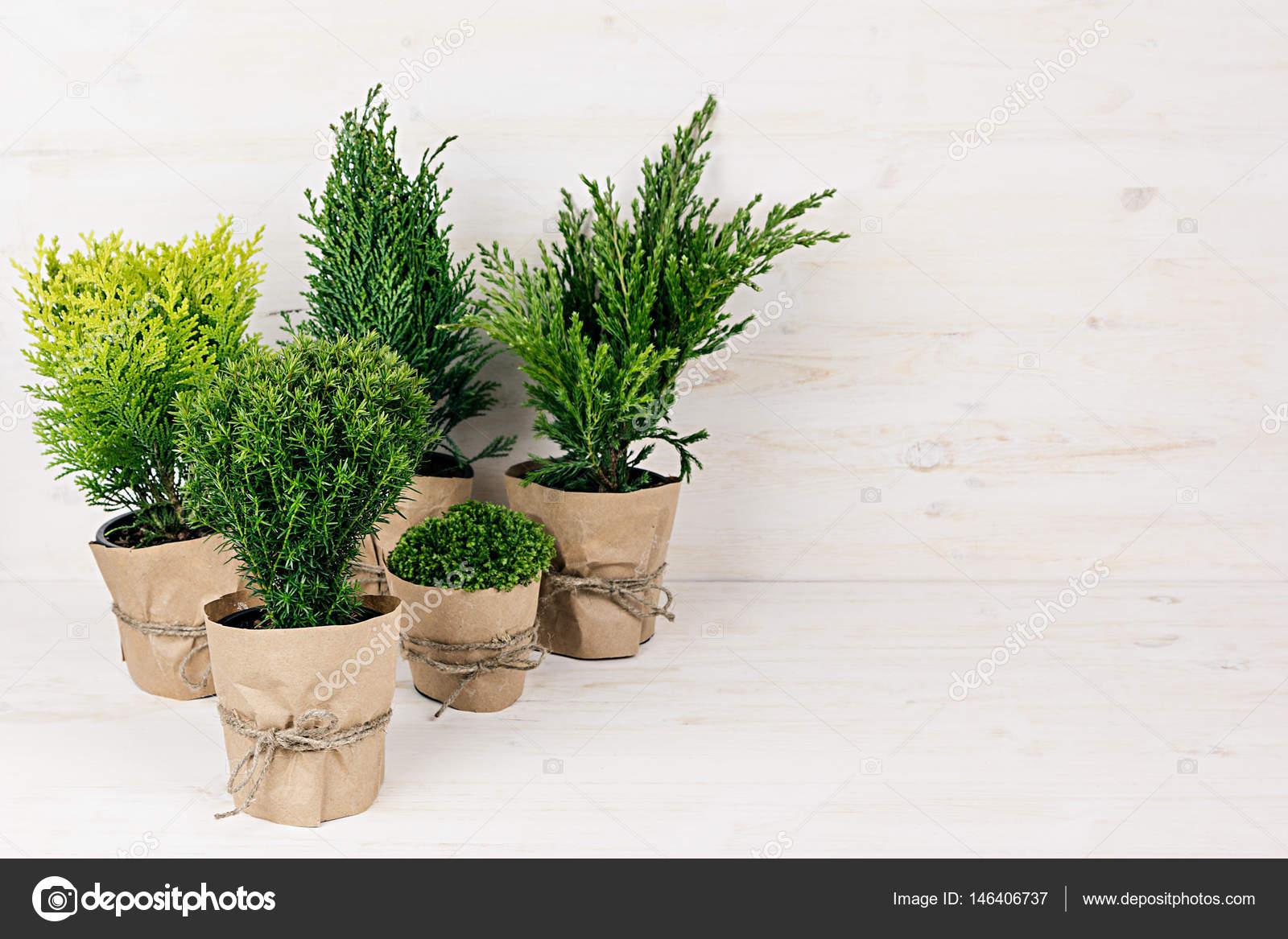 Piante arredamento moderno vasi moderni da interno con for Vasi arredamento moderno