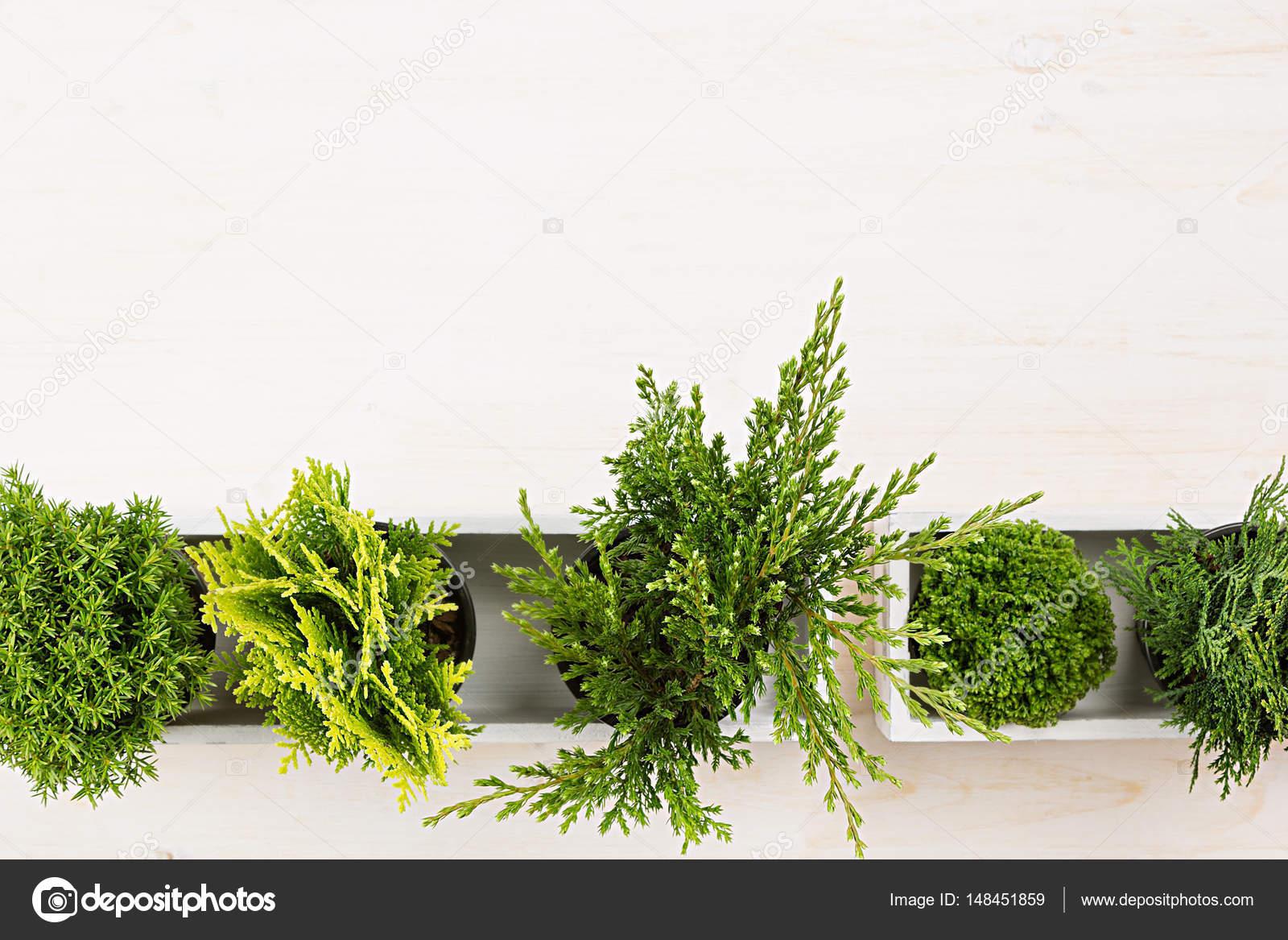 Minimalistische interieur werkplek met groene jonge twijgen van