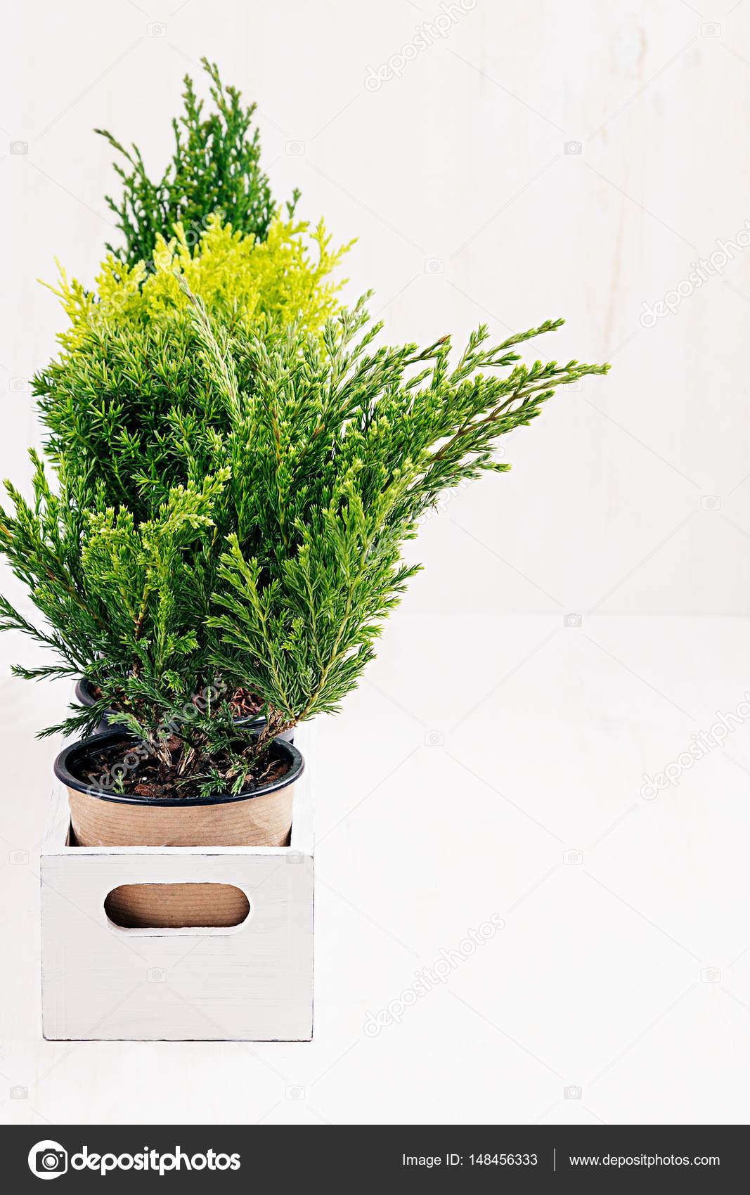 Nach Hause Weichen Modern Minimalistisch Mit Jungen Grünen Pflanzen