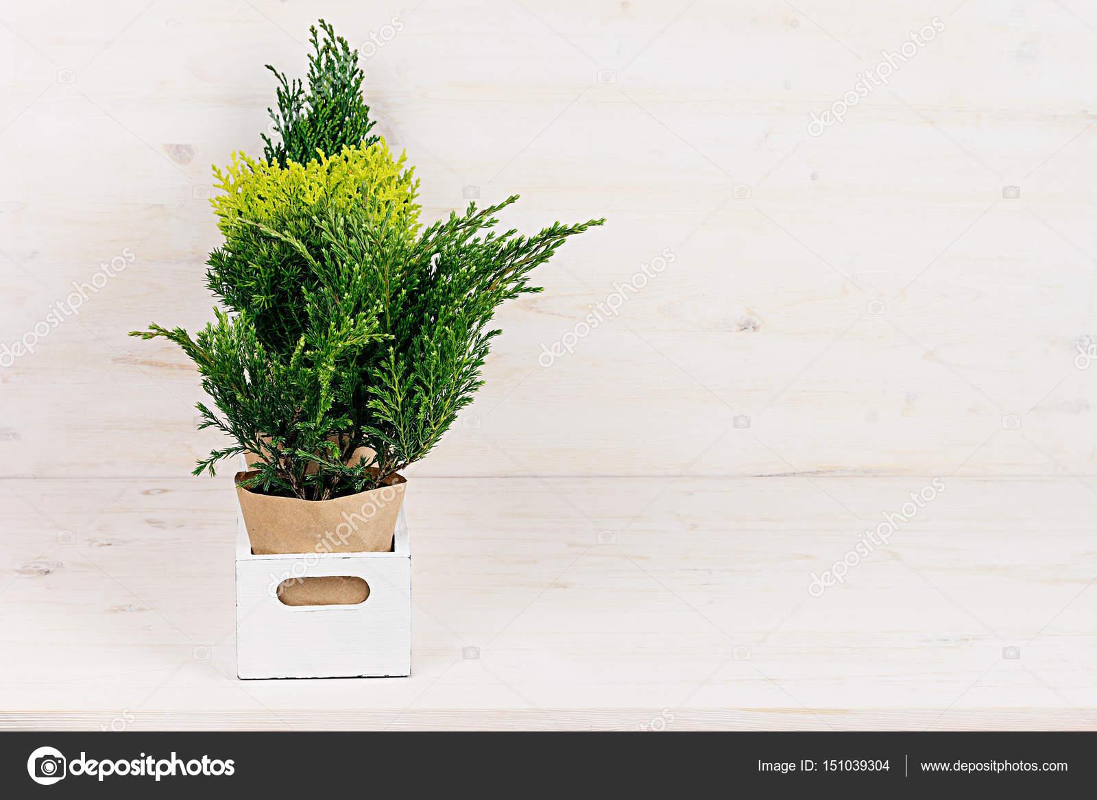 Wit modern minimalistisch interieur met jonge groene planten in