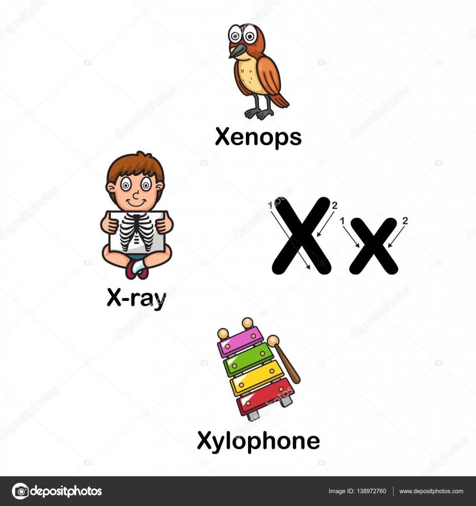 Alfabeto Letra X Xenops Rayos X Xilófono Ilustración Archivo