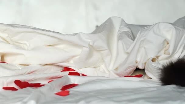 kočka a jeho černý ocas pod bílou přikrývkou se skrývají a loví. kočka si hraje na schovávanou. načechraný ocas vyhlíží z pokrývky. červená srdce na bílém prostěradle. Valentines, Láska koncept.