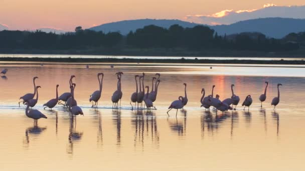amazing sunset light with pink flamingos in a barrier pond france