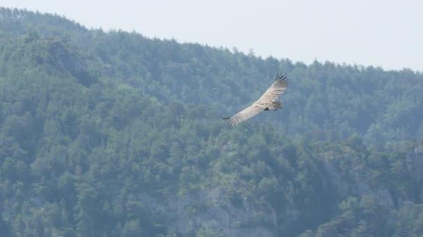 Griffon sup létání s lesem v pozadí francouzské rokle du tarn