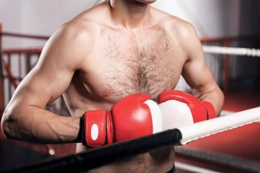 Close up of boxer wearing boxing gloves