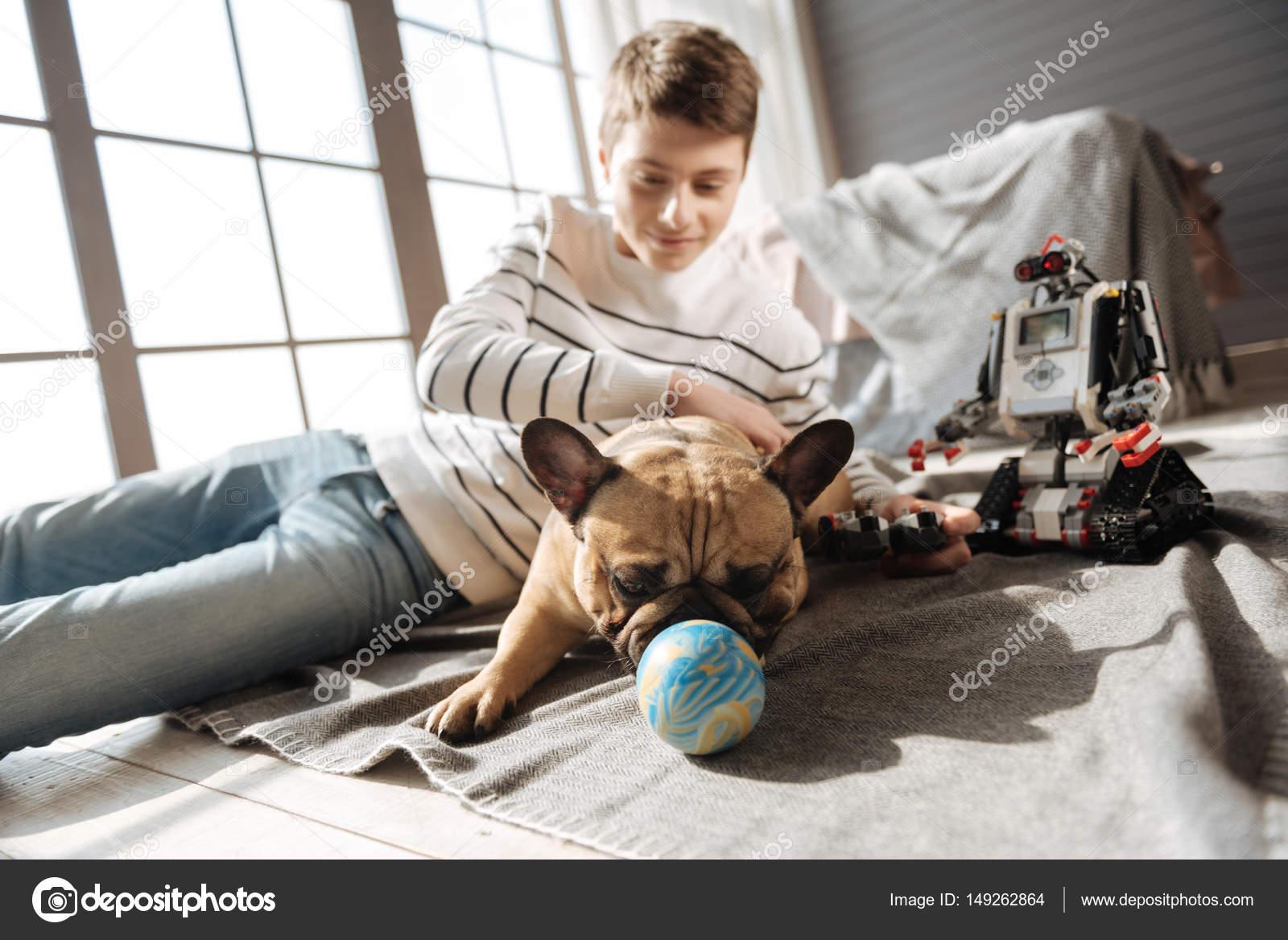 Маленькая собака с прямыми ушами, игры с мячом — Стоковое ...