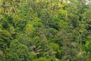"""Картина, постер, плакат, фотообои """"фото зеленых экзотических растений на острове """", артикул 348843346"""