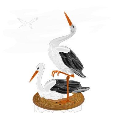 Storks on nest vector