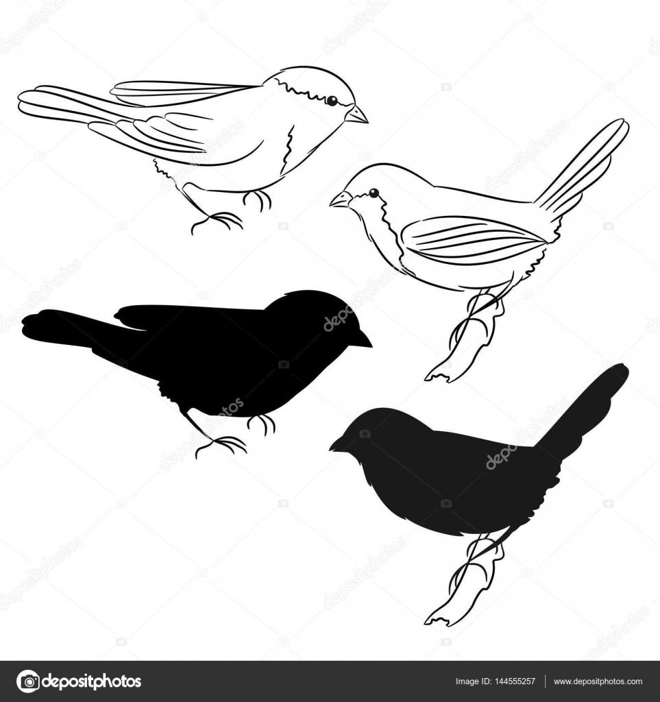 o contorno e da silhueta dos pássaros conjunto de quatro vetores