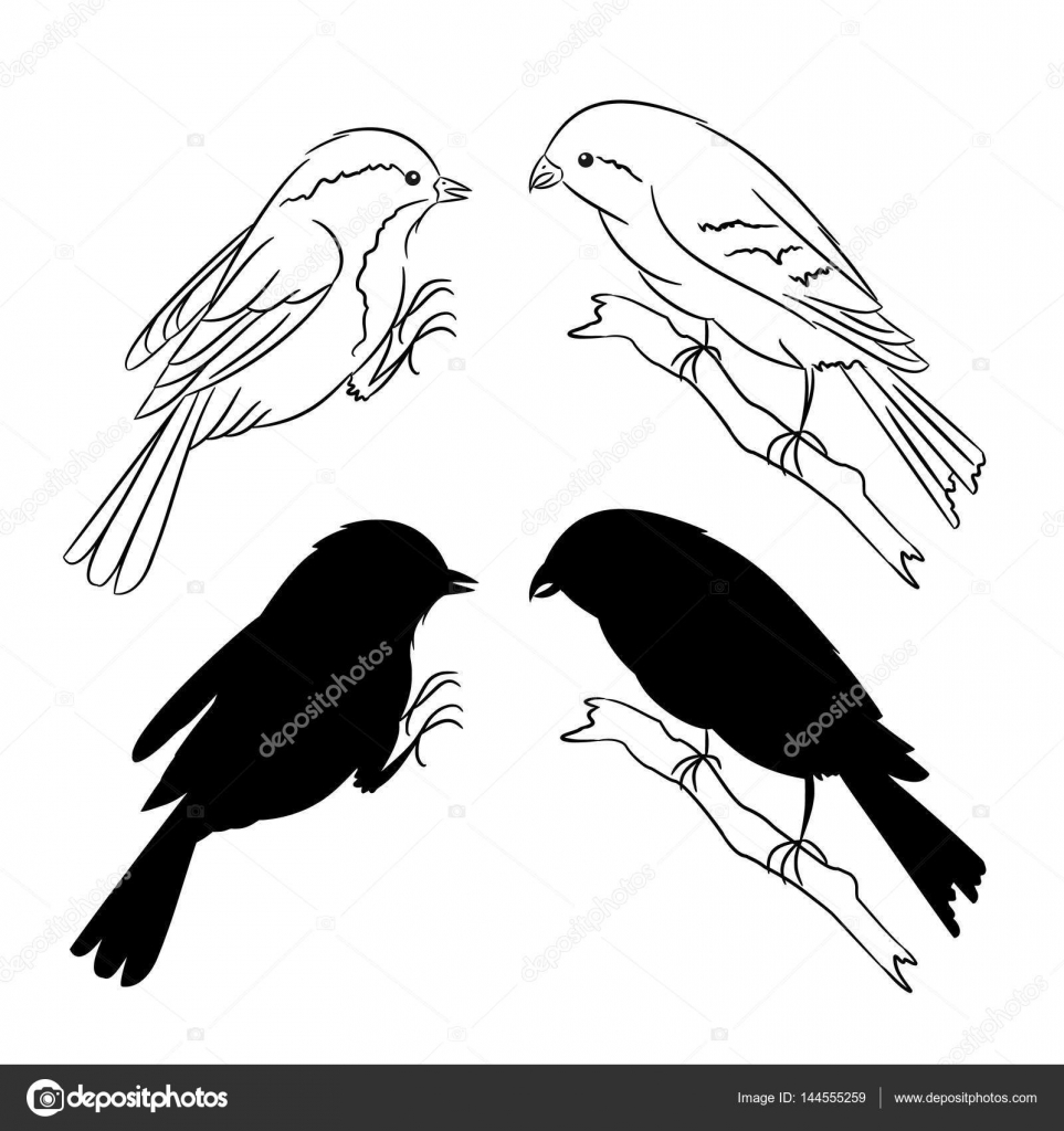o contorno e da silhueta do conjunto de aves de três vector vetor