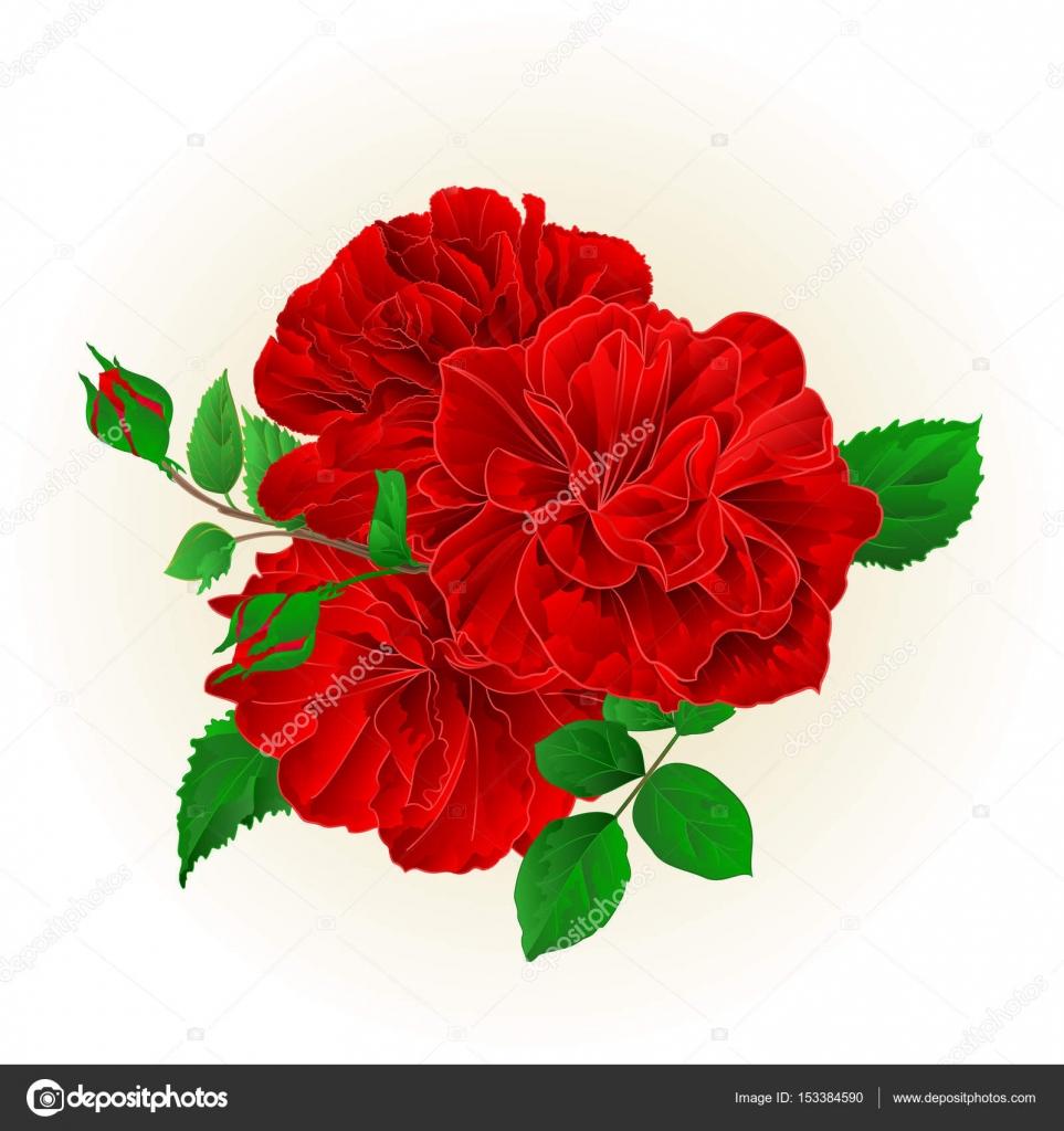 Dibujo De Rosas Rojas Grupo Tres Rosas Rojas Con Una Mano Vintage