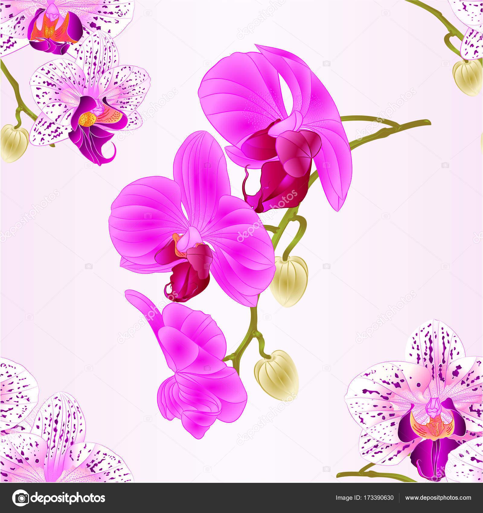 胡蝶蘭の花やつぼみのクローズ アップ ビンテージ ベクトルの編集可能な