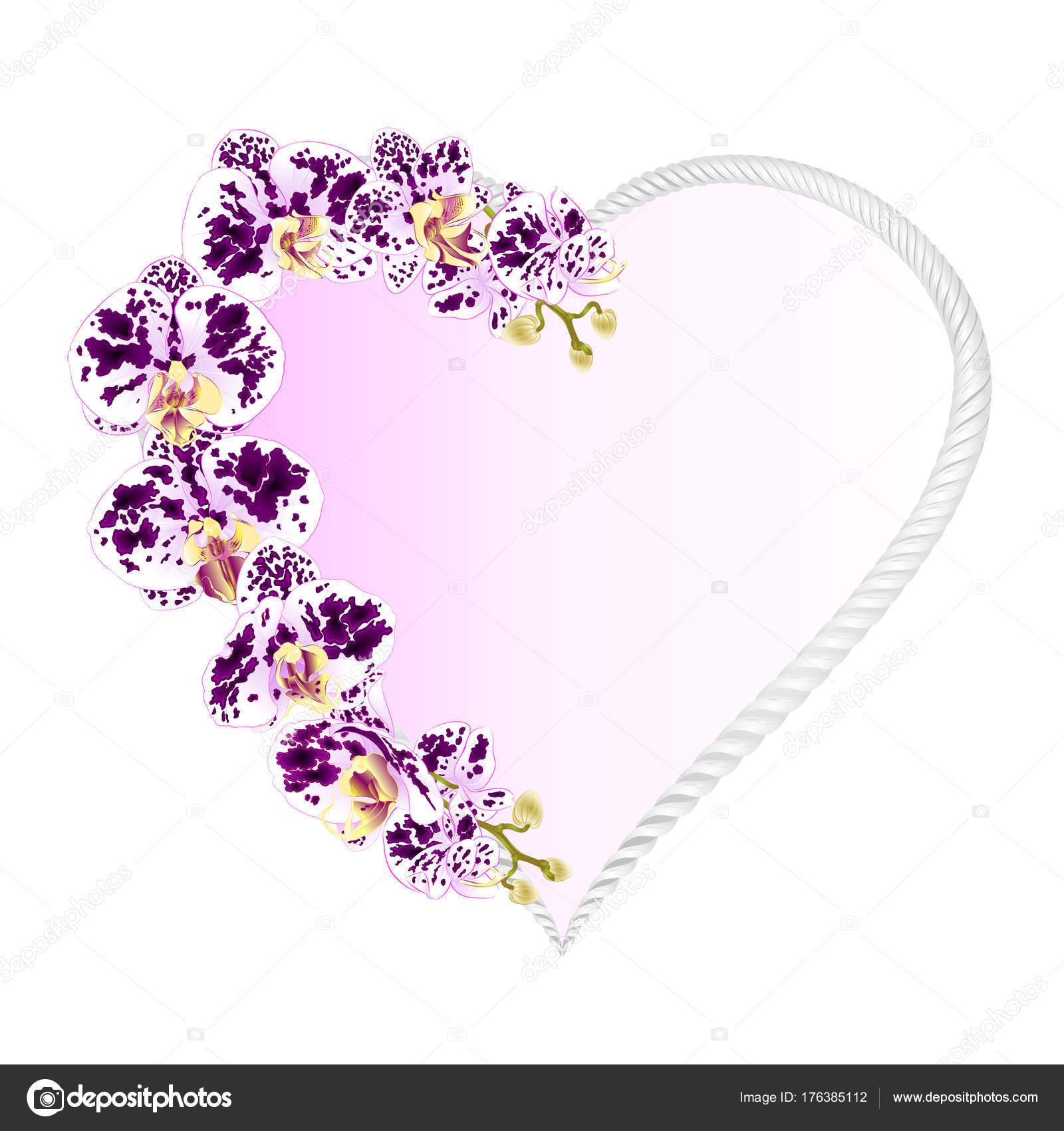 Orquídea Forma Corazón Marco Phalaenopsis Manchado Púrpura Blancas ...