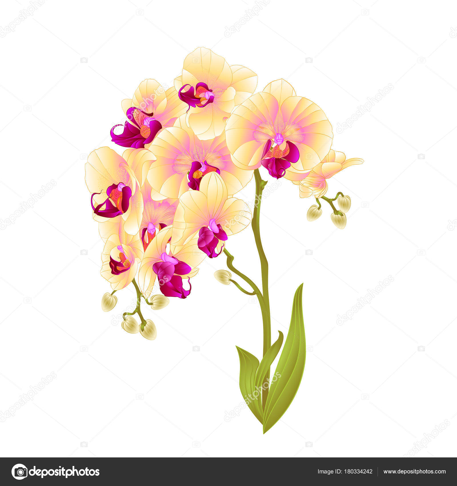 Branches Orchid Phalaenopsis Yellow Flowers Leaves Tropical Plants