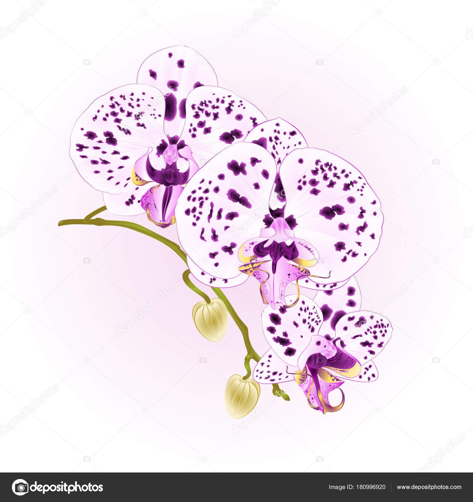 Рисуем точками цветы