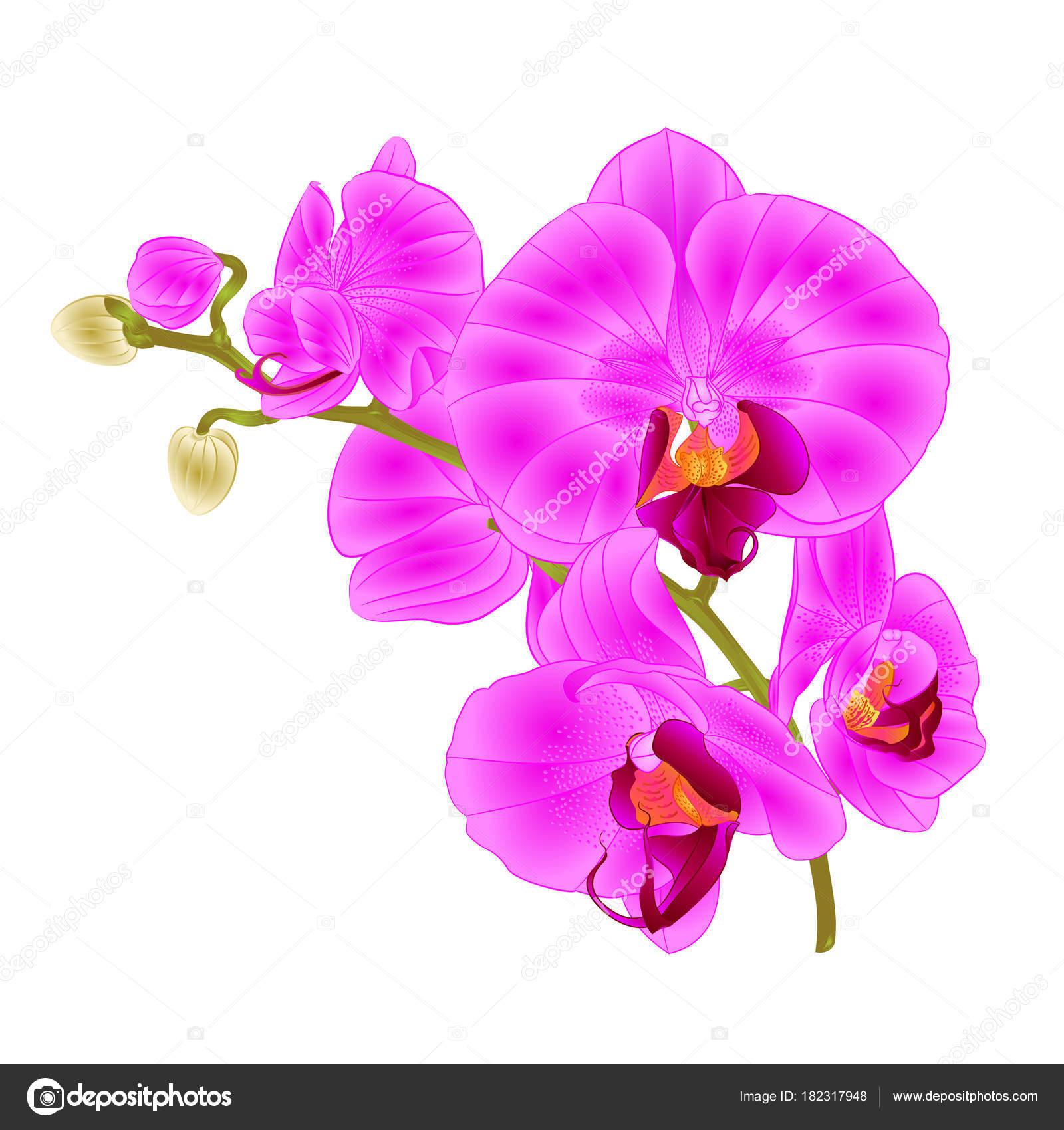 支店蘭紫花熱帯植物デザイン手の白い背景ビンテージ ベクトル ボタニカル
