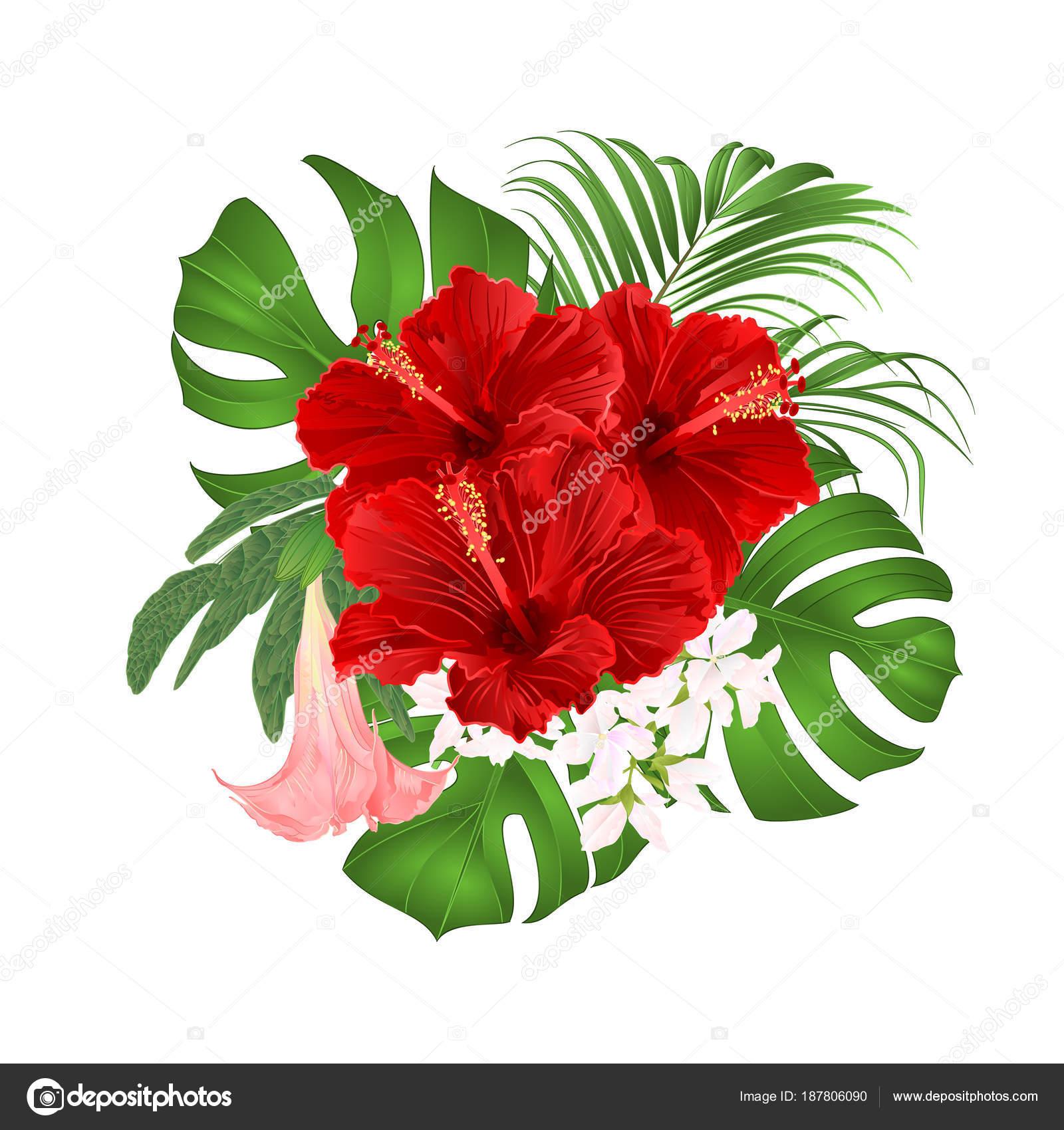 Bouquet Tropical Flowers Floral Arrangement Beautiful Red Hibiscus ...