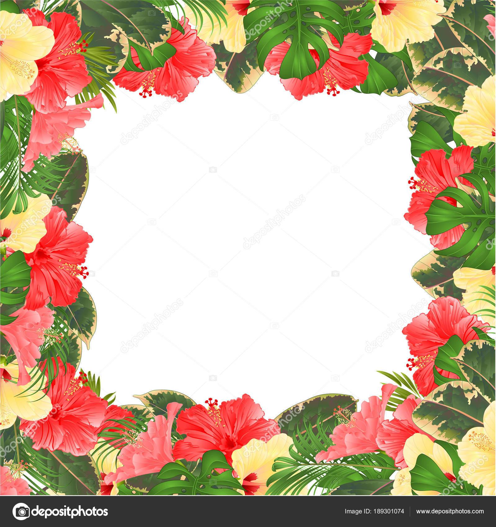 Rahmen Floral Rand Festlichen Hintergrund Mit Verschiedenen Hibiskus ...