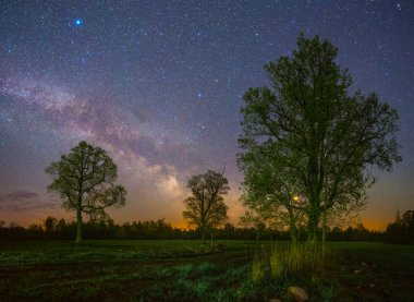 Stars Shining in sky at night over oaks