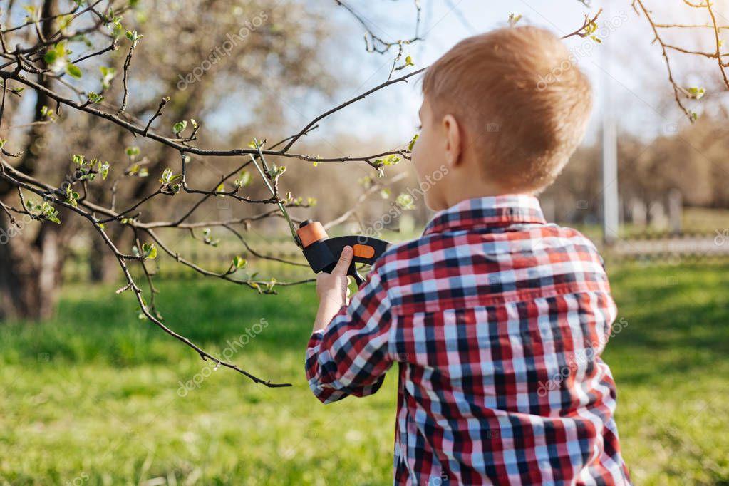 Little boy pruning apple trees